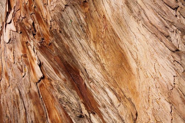 Cipreste: características, habitat, usos, pragas e doenças 3