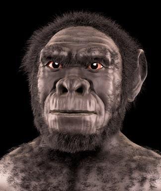 Evolução do homem: estágios e suas características 7