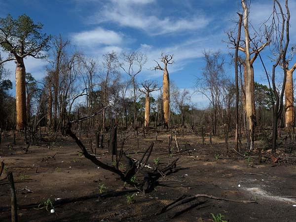 Deterioração ambiental: causas, consequências e soluções 2