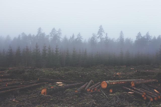 Os 10 problemas ambientais mais importantes da Argentina 10