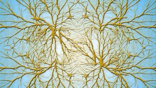 O que são dendritos de neurônios? 1