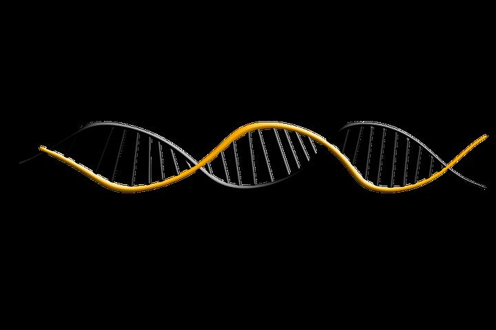 Endonucleases: funções, tipos e exemplos 1