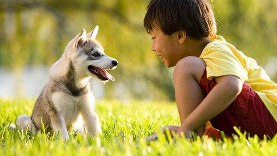 Como desenvolver empatia por animais em crianças 1