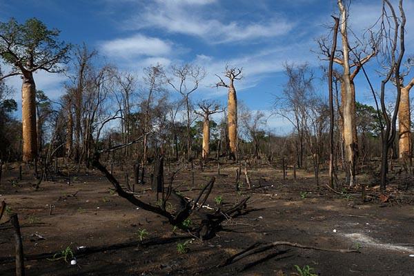 Desertificação: características, causas e consequências 1