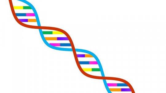 Determinismo genético: o que é e o que isso implica na ciência 1