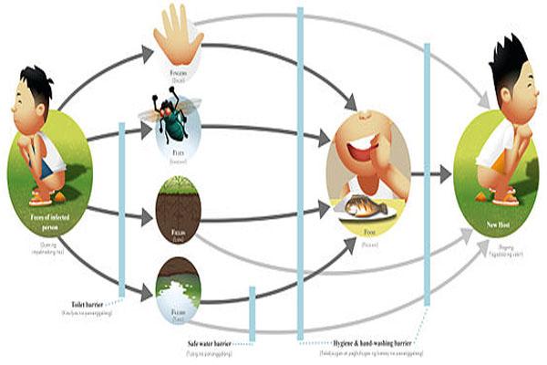 Contaminação de alimentos: características, tipos, consequências 2