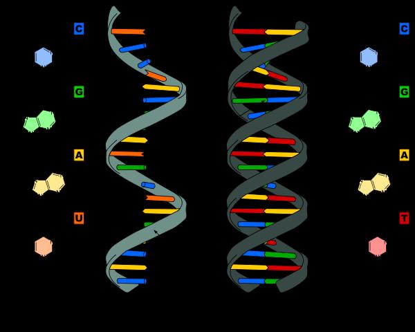 As 6 etapas do método científico e suas características 9