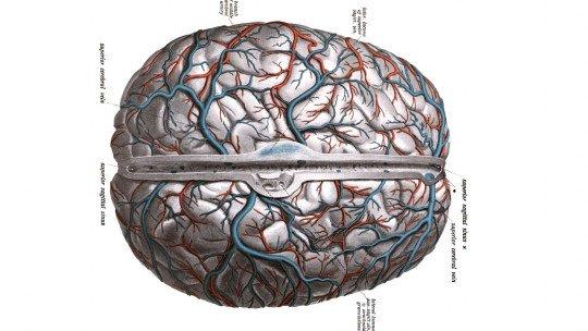 As 7 diferenças entre artérias e veias 1