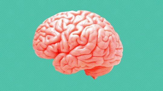 Diferenças entre psicologia e neuropsicologia 1