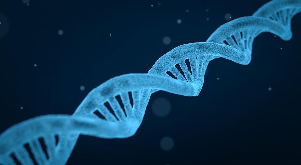 Monoplóide: como ocorre, organismos, frequência e utilidade 1