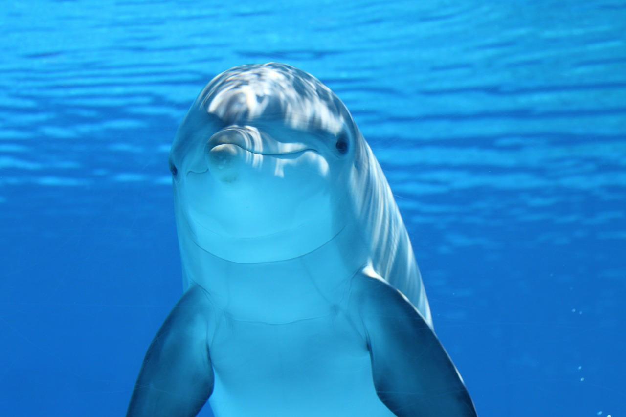 Mecanismo de Comunicação de Golfinhos na Água 1