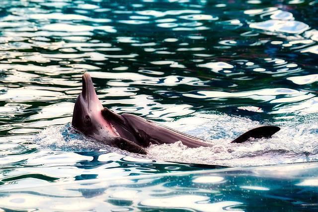 Mecanismo de Comunicação de Golfinhos na Água 2