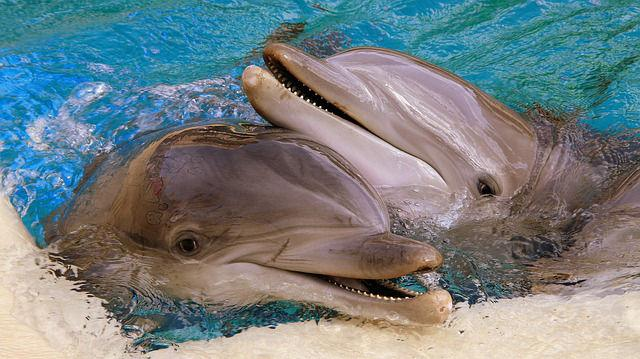 Mecanismo de Comunicação de Golfinhos na Água 3