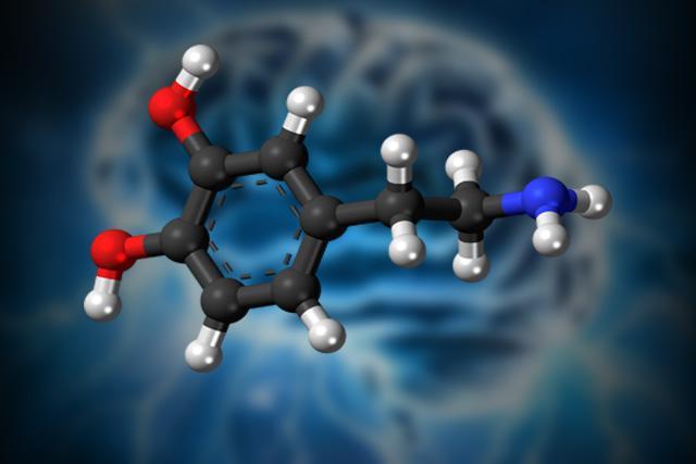 Dopamina: função, mecanismo de ação, síntese 2