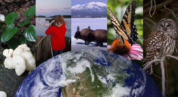 Importância do fluxo de matéria e energia nos ecossistemas 1