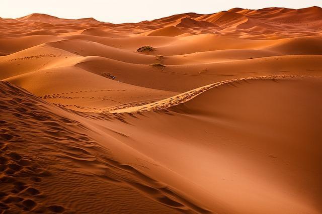 Ecossistema do Deserto: Características, Tipos, Flora e Fauna 1