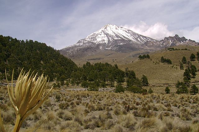 Ecossistemas terrestres do México: tipos e 47 zonas 1