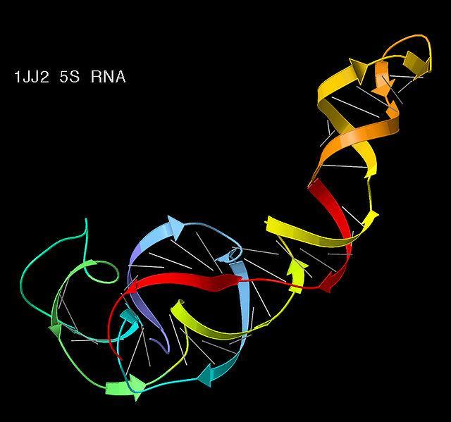 Síntese proteica: estágios e suas características 4