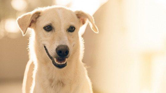 Efeito placebo em animais: o que é e por que aparece 1