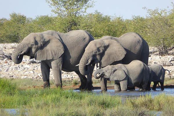 Animais quadrúpedes: características e exemplos 1