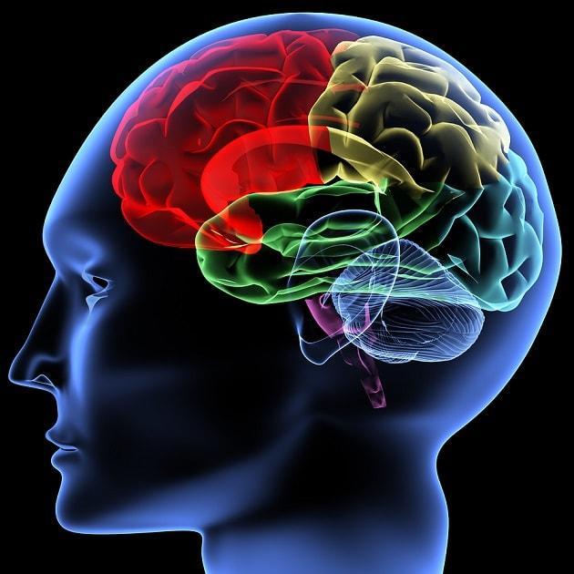 Dor: fisiologia, processos cerebrais e receptores 2