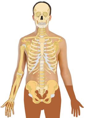 Doenças do sistema ósseo e prevenção 1