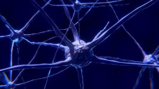 Engramas: os traços que as experiências nos deixam no cérebro 1