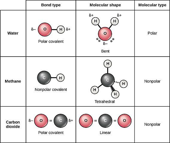 Ligação covalente não polar: características, formação, tipos 1
