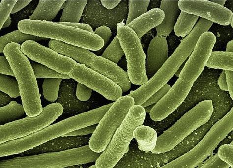 As 10 doenças microbianas mais comuns 3