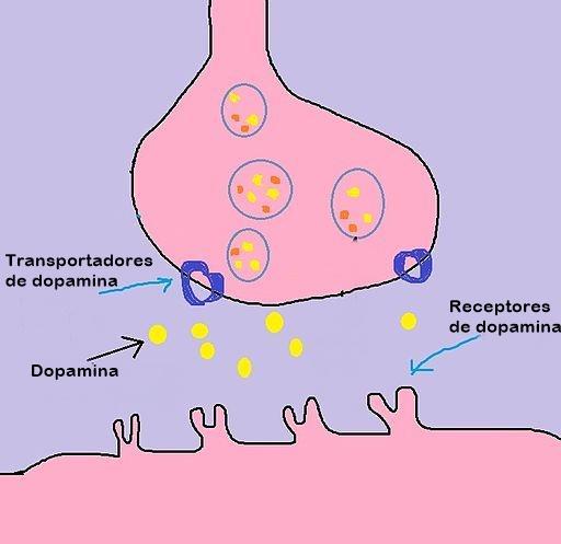 Dopamina: Funções e Mecanismo de Ação 3