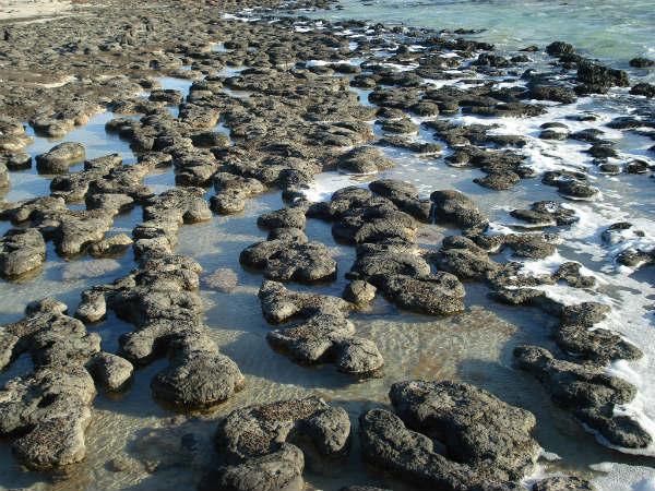 Estromatólitos: quando e como eles se originaram, importância 1
