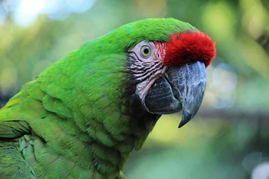 Flora e fauna da floresta tropical: características e espécies 2