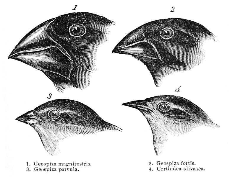 Árvore filogenética: tipos e suas características, exemplos 1