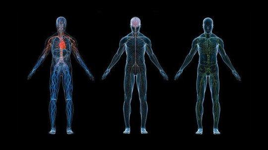 O que é fisiologia? História e bases teóricas e práticas 1
