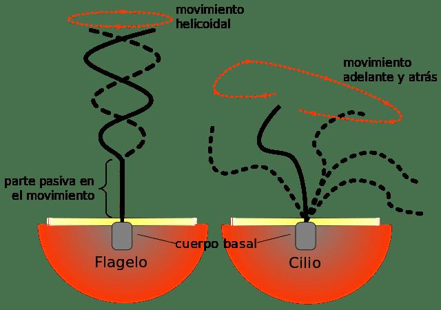Monera Kingdom: Características, Classificação e Exemplos 3