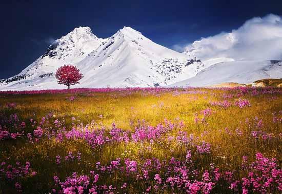 Flora e fauna da Europa: características e espécies 1