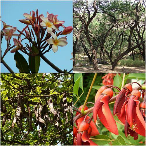 A flora da costa peruana: espécies e conservação 1