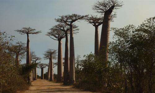 Flora e fauna da África: espécies mais representativas 1