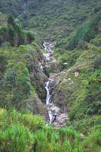 Flora e fauna do Equador: características e espécies 1