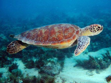 Flora e fauna das Ilhas Galápagos: principais características 1