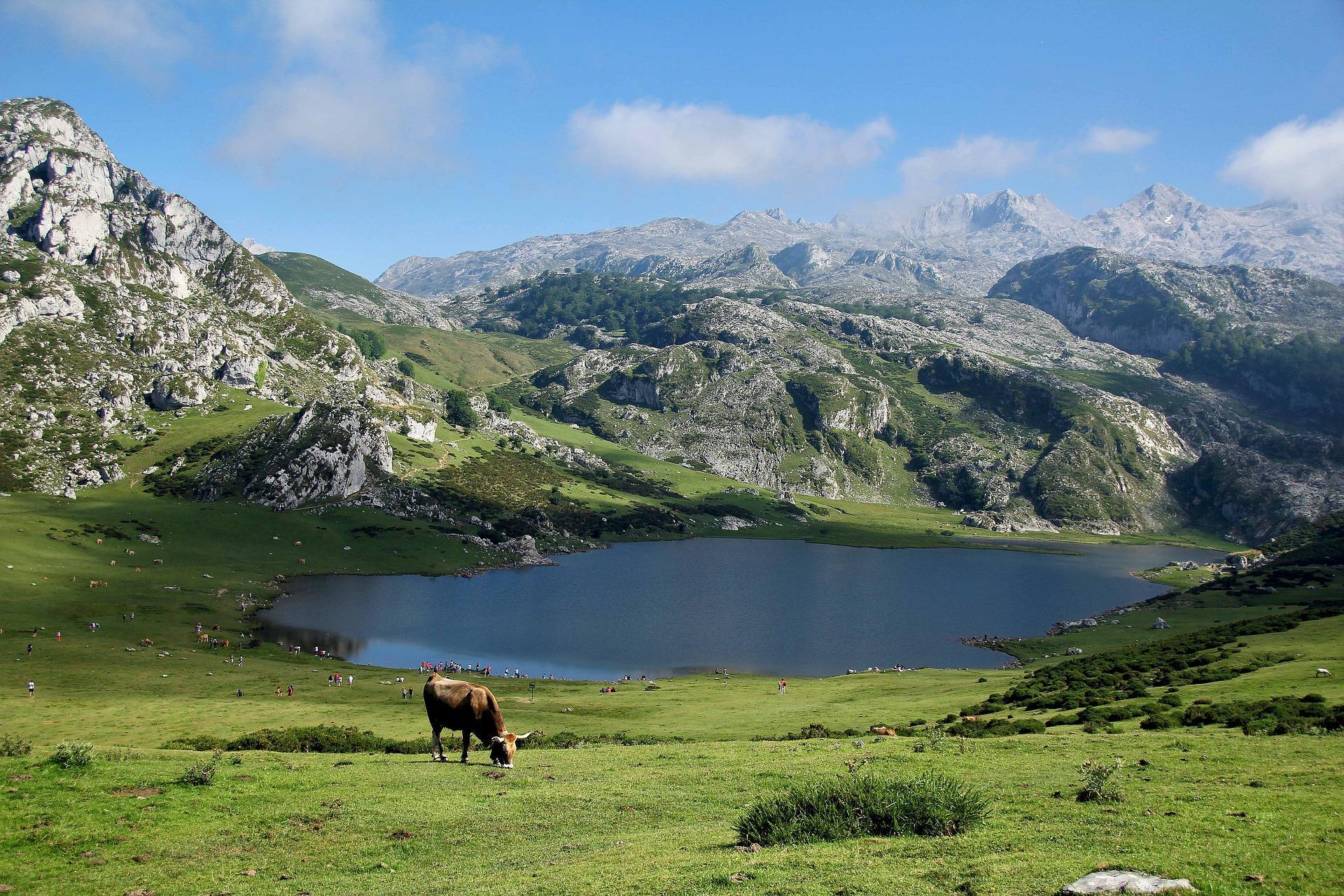 Flora e fauna da serra equatoriana: principais espécies 1