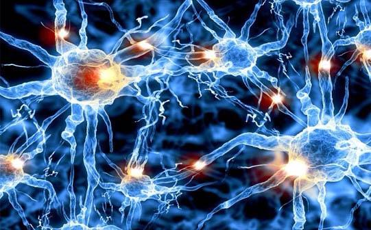 Os 35 tipos de neurônios, funções e características 3