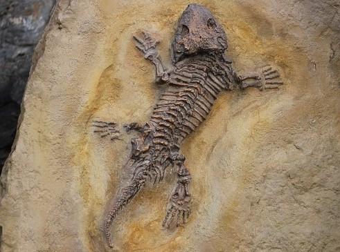 Tafonomia: história, preservação e alteração de fósseis 2