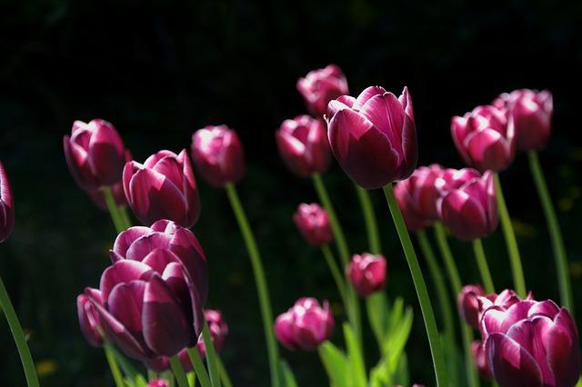 As 100 melhores frases de flores 1