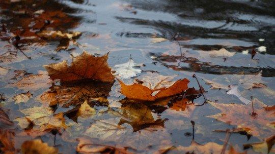 As 70 melhores frases sobre chuva 1