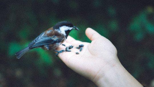 As 84 melhores frases da natureza (e citações famosas) 1