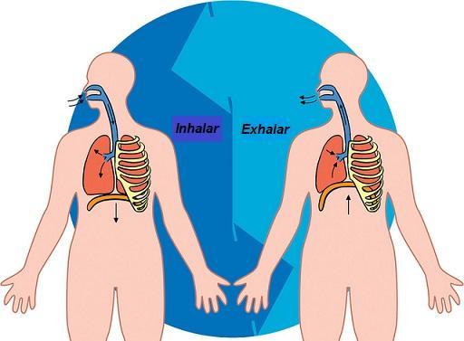 Qual é a frequência respiratória? 1