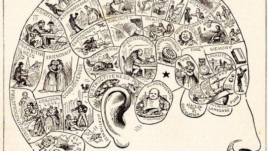 Frenologia: medir o crânio para estudar a mente 1