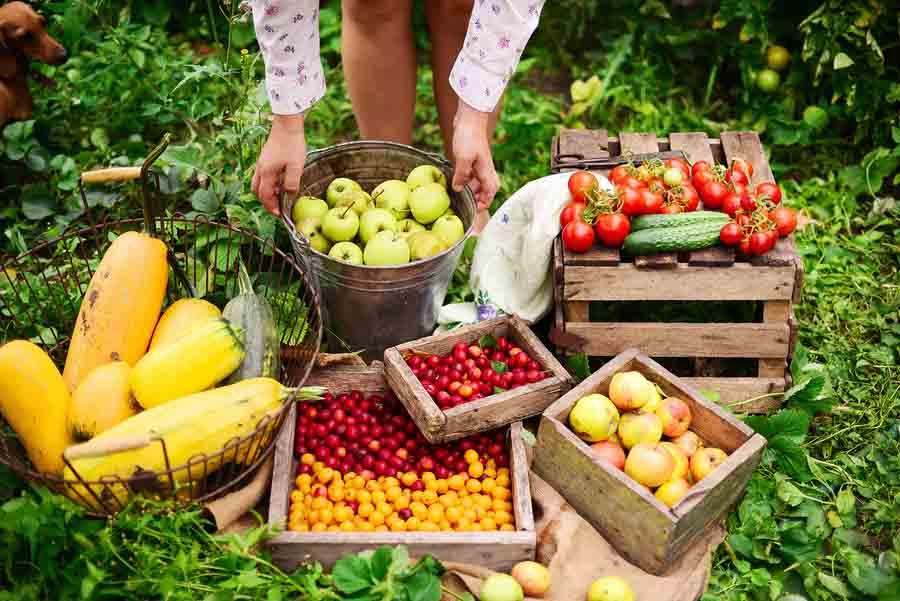 Os 5 tipos de frutas mais importantes 1