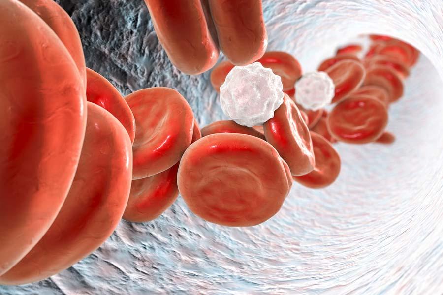 Quais são as funções do sangue? 1